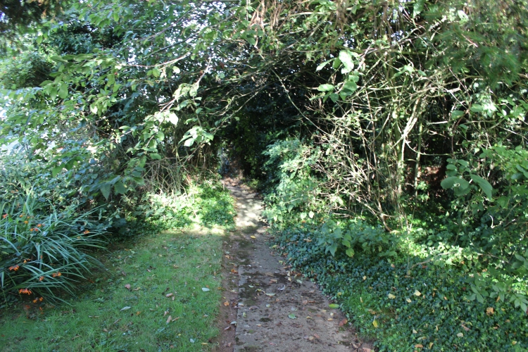 The pathway through the front garden, enclosed by various trees and shrubs that were masking the rest of the area