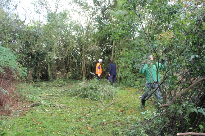 Creating piles of cuttings as the land was cleared to then be shredded and chipped