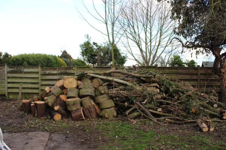 Logs and sticks waiting to be chopped up and stored