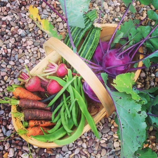 Kohl Rabi and purple carrots!